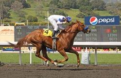 La caramella del Sidney vince la Santa Anita Derby Immagine Stock