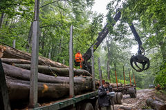 La carga de madera abre una sesión el camino 03 de la montaña Imágenes de archivo libres de regalías