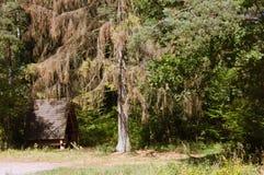 La carlingue dans les bois Photographie stock libre de droits