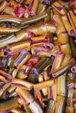 La carne de la anguila Imagen de archivo libre de regalías