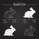 La carne di coniglio taglia lo schema - lavagna Immagini Stock Libere da Diritti