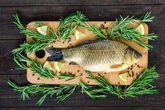 La carpa viva grande crucian en una tabla de cortar con romero ramifica Foto de archivo libre de regalías