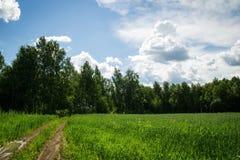 La carretera nacional entre los campos verdes con un bosque en un fondo Imágenes de archivo libres de regalías
