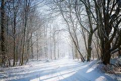 La carretera nacional estrecha cubierta con nieve lleva con un invierno para Imagen de archivo libre de regalías