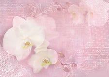 La carta con l'orchidea fiorisce su un fondo rosa-chiaro Modello di un invito, delle nozze, di un compleanno, di un anniversario  Fotografia Stock