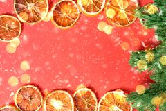 la carta con le arance secche, albero di Natale del nuovo anno verde, si svasa immagini stock libere da diritti