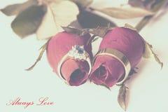 La carta d'annata delle rose e delle fedi nuziali Fotografie Stock