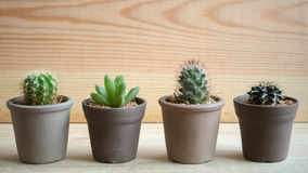 La carta da parati dei cactus Fotografia Stock
