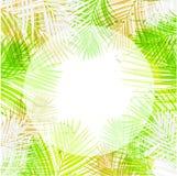 La carta verde del verano del fondo del vector sale de la palma ilustración del vector
