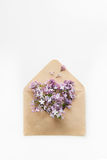 La carte blanche avec l'enveloppe ouverte de papier de métier a rempli de fleurs lilas pourpres de fleur de ressort s'étendant su Image libre de droits