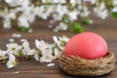 La carte de Pâques heureuse avec l'oeuf de pâques pendant nid et le ressort fleurit Photographie stock