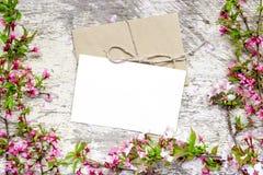 La carte de voeux et l'enveloppe blanches vides avec les branches se développantes de ressort de Sakura et de cerise fleurit Image libre de droits