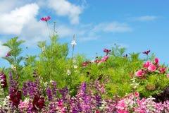 La carte de voeux - pré coloré de fleur - été fleurit - rose - le pourpre - violette photos stock
