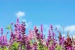 La carte de voeux - pré coloré de fleur - été fleurit - rose - le pourpre - violette photos libres de droits