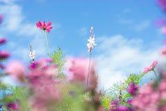 La carte de voeux - pré coloré de fleur - été fleurit - rose - le pourpre - violette image libre de droits