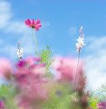 La carte de voeux - pré coloré de fleur - été fleurit - rose - le pourpre - violette image stock