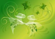 La carte de voeux vert clair avec des papillons et le blanc cintrent Photo stock