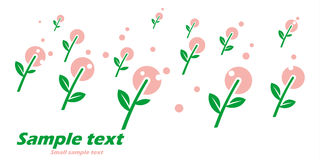 La cartolina primitiva con la molla fiorisce su fondo bianco Fotografie Stock Libere da Diritti