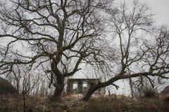 La casa abbandonata ed a pezzi ha custodetto da due alberi enormi Fotografie Stock Libere da Diritti