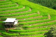 La casa bianca sta restando sul terrazzo verde del riso Immagini Stock Libere da Diritti