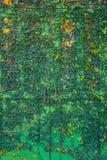 La casa d'annata del cottage decora con la pianta verde dell'edera fotografie stock libere da diritti