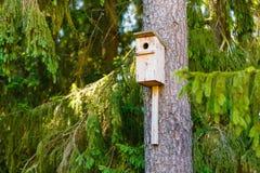 La casa del estornino ató al árbol de abeto viejo en bosque conífero imagen de archivo