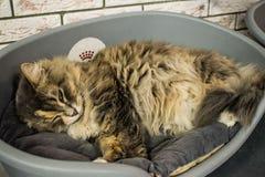 La casa del ` s del gato Imagen de archivo