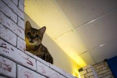 La casa del ` s del gato Fotografía de archivo