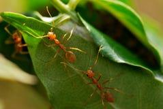 La casa delle formiche Immagini Stock Libere da Diritti