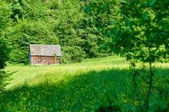 La casa di legno è situata sull'orlo del campo con i wildflowers, molto verde della foresta fotografia stock