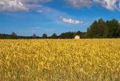 La casa en campo de trigo. Finlandia Fotografía de archivo libre de regalías
