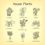 La casa planta el dibujo Foto de archivo libre de regalías