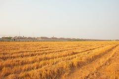 La casa vicina del riso del giacimento arancio del riso fotografia stock libera da diritti