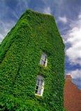 La casa vieja demasiado grande para su edad con la hiedra. Imagenes de archivo