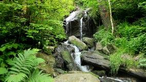 La cascada cae sobre rocas cubiertas de musgo en bosque checo metrajes