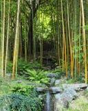 La cascada de caídas en una arboleda de bambú Foto de archivo