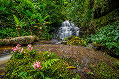 La cascada de Mun-Dang con la flor del antirrino fotos de archivo