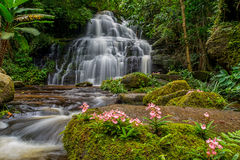 La cascada de Mun-Dang con la flor del antirrino imágenes de archivo libres de regalías