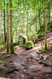 La cascada de Triberg en Alemania, bosque negro Imagenes de archivo