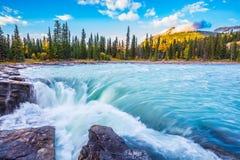 La cascada que burbujea de Athabasca Imagen de archivo libre de regalías