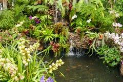 La cascada y la planta forran el adornamiento en el jardín Imagenes de archivo
