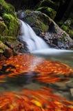 La cascade d'exposition de long temps avec l'orange part en automne de Bavière Allemagne photographie stock libre de droits