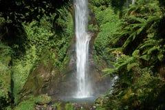 La cascade de Sekumpul dans Bali a entouré par la forêt tropicale images stock