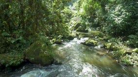 La cascade a tiré plus de par le bourdon, les eaux à la grande vitesse au milieu de la forêt clips vidéos