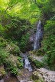 La cascade très haute dans la forêt, le Hossawa tombe dans Hinohara Image libre de droits