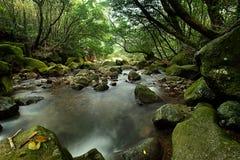 La cascata cade sopra il vecchio fiume della prugna con le rocce Fotografia Stock