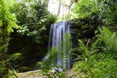 La cascata che scorre giù il muschio ha coperto le rocce Immagini Stock Libere da Diritti