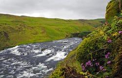 La cascata del fiume dell'Islanda con il rosa fiorisce l'erba e le pietre mossed immagini stock