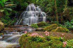 La cascata di Mun-Dang con il fiore di antirrino Immagini Stock Libere da Diritti