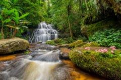 La cascata di Mun-Dang con il fiore di antirrino Fotografia Stock Libera da Diritti